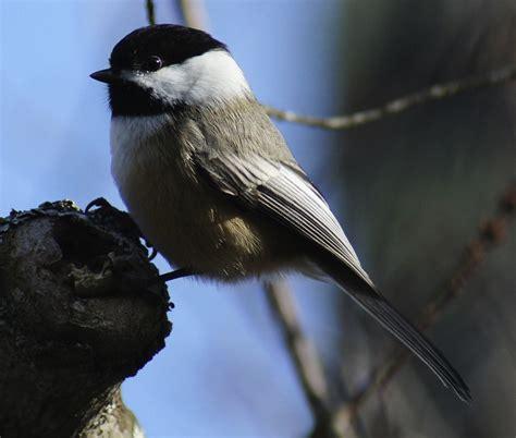 butler s birds birding fun in new hshire