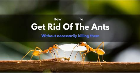 how to get rid of ants on patio plan insects pests archives gardening wizards