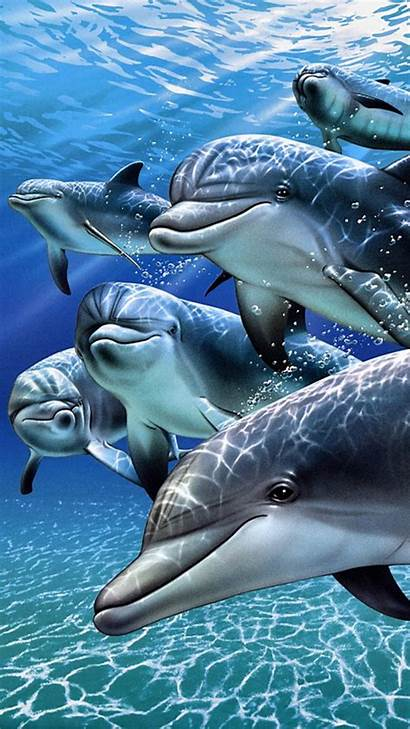 Phone Dolphins Wallpapers Dolphin Animals 720p Cell