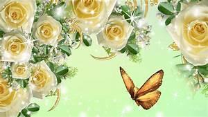 Beautiful Yellow Roses HD Wallpapers Free Downloads