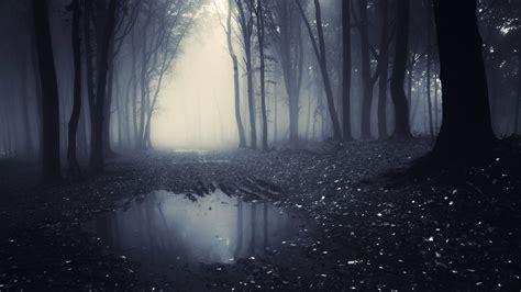 dark forest chromebook wallpaper