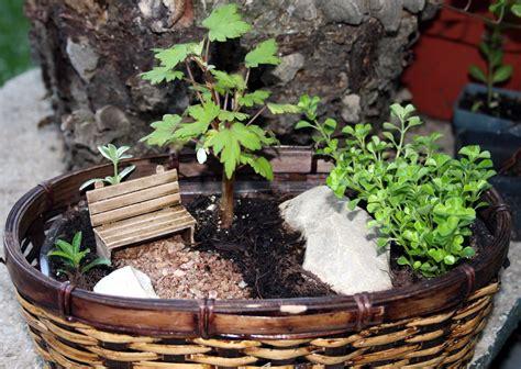 shana sommerregens miniatur taman pot