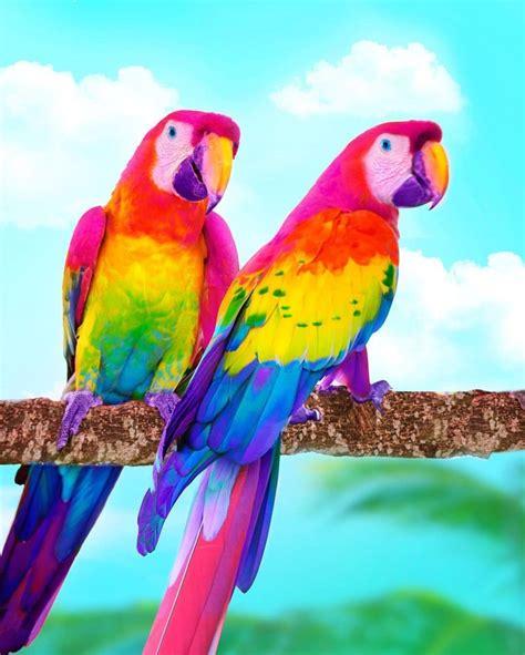 pin de jane cee en rainbow en  colorful animals