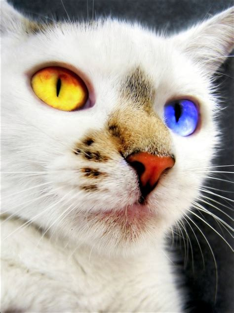 cats different cat colors eye photoshopped funny patch
