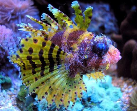 colorful saltwater fish colorful fish