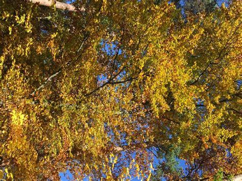Mein Schöner Garten Im Herbst by Garten Quasseltanten Im Herbst 2016 Mein Sch 246 Ner Garten