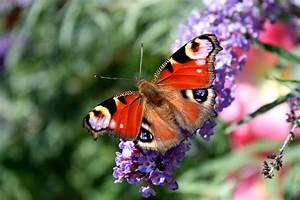Schmetterling Am Kinderbett : schmetterling am morgen foto bild anf ngerecke ~ Lizthompson.info Haus und Dekorationen