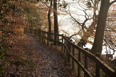 stock photo  path  autumn forest