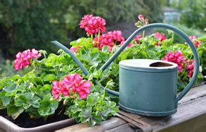 Blumen Für Sonnenbalkon by Die Besten Balkonpflanzen F 252 R Sonnige Und Schattige Balkone