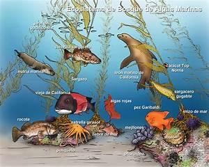 Aquatic Ecosystems: Aquatic Ecosystems Animals