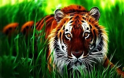 3d Tiger Wallpapers Desktop Screen