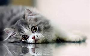 Beautiful Cat Wallpapers HD Pictures | One HD Wallpaper ...