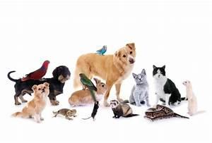 Haustiere Für Kinder : arzneimittel f r haustiere apo ~ Orissabook.com Haus und Dekorationen