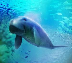 Cute Rare Sea Animals | Wallpapers Gallery