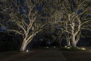 lighting large trees siderar landscape lighting With outdoor accent lighting for trees