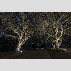 Lighting Large Trees  Sidera® Landscape Lighting