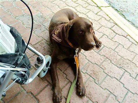 therapiehund cumcane familiari die ausbildung fuer