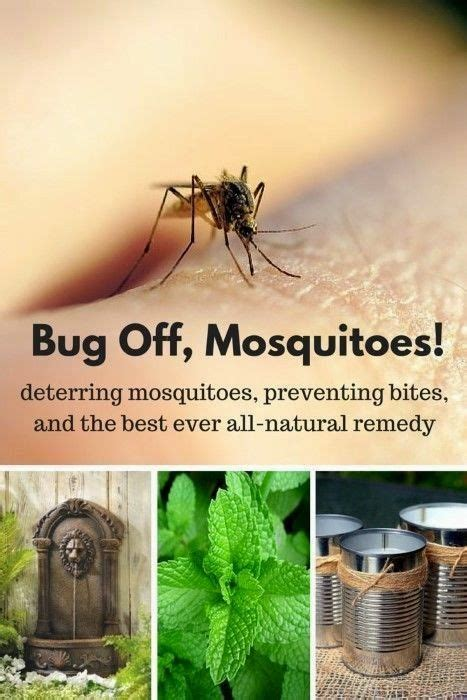 what deters mosquitoes here are four ways to deter and prevent mosquitoes and one remedy to stop itching bites if the