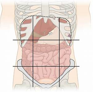 File Abdominal Regions Cleaned Png