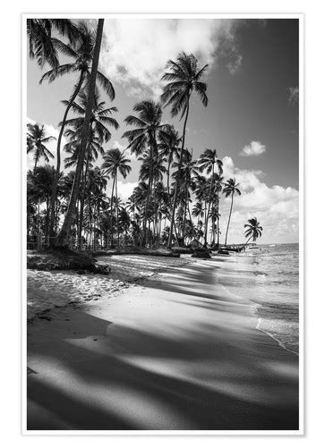 tropical palm trees   brazilian beach  black