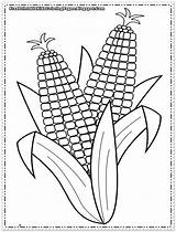 Corn Coloring Pages Printable Cob Sheets Indian Colouring Sheet Template Printables Preschool Print Autumn Ears Flower Food Popular Coloringhome sketch template