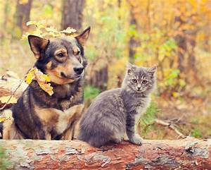 20 cats and dogs that can't get enough of fall | MNN ...