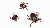 Rocky Mountain Spotted Fever: New Concerns