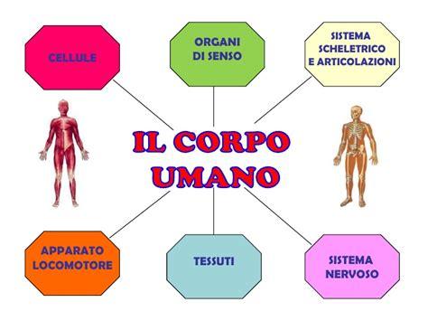 il corpo umano gli organi interni grande disegno corpo umano organi interni gf85 pineglen