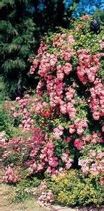 Rankhilfen Für Rosen : rankhilfen f r rosen clematis kletterpflanzen aus metall online kaufen bei schmid gartenpflanzen ~ A.2002-acura-tl-radio.info Haus und Dekorationen