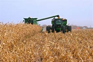 Manitoba corn harvest off and running | Canadian Cattlemen