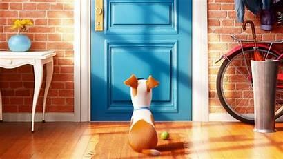 Pets Secret Wallpapers 1080 2560 1440
