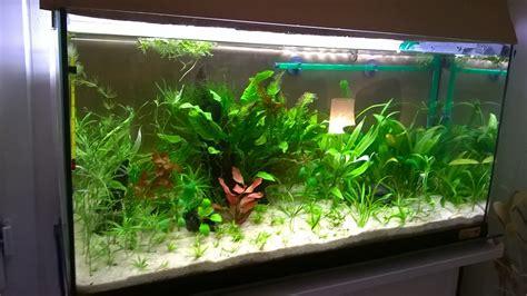 aquarium 100l peupl 233 seulement avec une esp 232 ces de poisson de fond votre avis