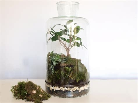 terrarium l mamy je terrarium l już dostępne stw 243 rz piękne roślinne