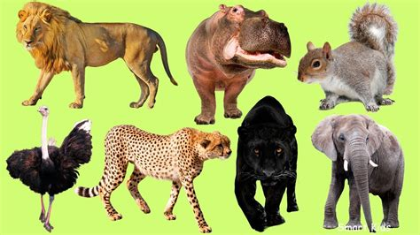 Learn African animals Learn Names and Sounds of animals