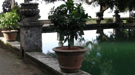citronnier en pot au bord d un bassin foto di villa d este tivoli tripadvisor