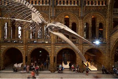 Museum Natural History Gifs Space London Skeleton