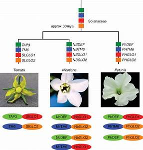 Origin And Evolution Of B