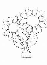 Daisies Flowers Coloring Coloringpage Eu Reddit sketch template