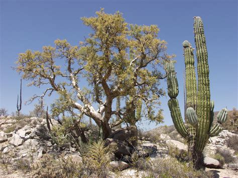 desert flowers anza top 9 plants commonly found in deserts listovative
