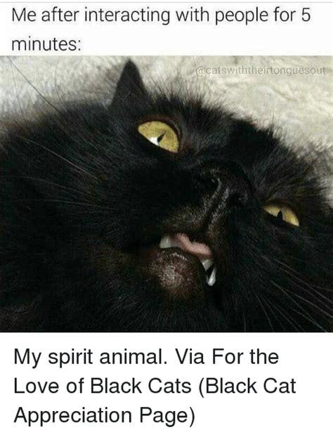 Black Cat Meme - 25 best memes about black cat black cat memes