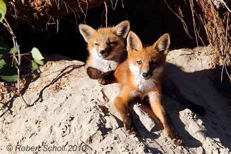 nature  wildlife photography fine art prints  robert