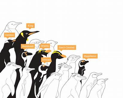 Penguins Threats Penguin Solutions
