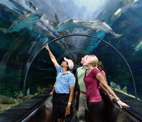 Sea World San Diego Underwater Media