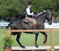 Working Equitation Pic...