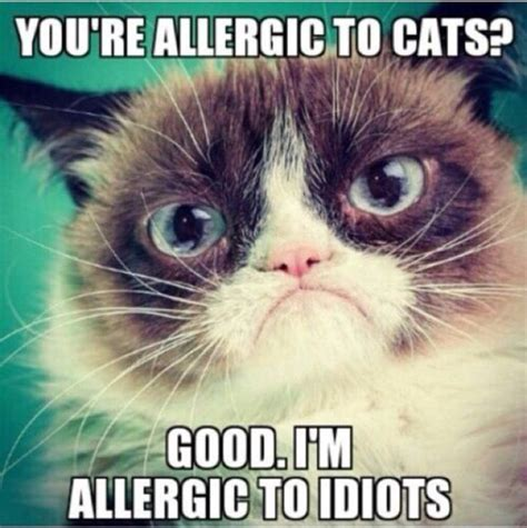 Best Angry Cat Meme - 1384 best images about grumpy cat on pinterest gift quotes angry cat and grumpy cat quotes