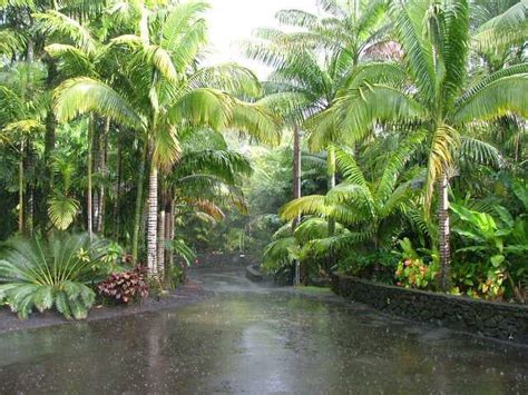 tropical landscapes tropical landscape emphasis on palm trees cycads and companion plants