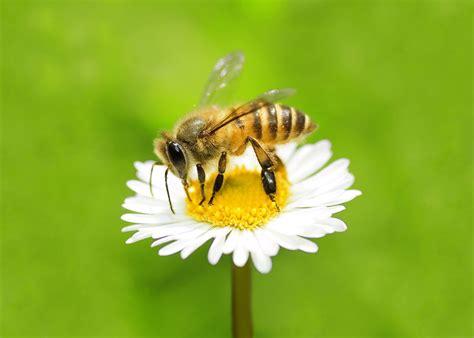 wur bloemen bijen uit de kast wur