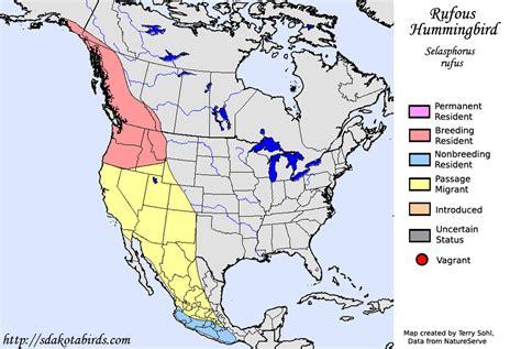 rufous hummingbird species range map