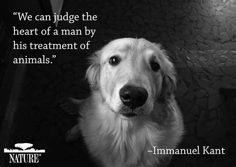 animal lover quotes quotesgram