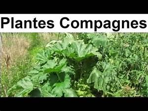 Plantes Amies Et Ennemies Au Potager : rotations et associations au potager youtube ~ Melissatoandfro.com Idées de Décoration